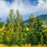 Slopes of mountains, coniferous trees and clouds in the evening sky. Picturesque and gorgeous scene. Location place Carpathian,. Ukraine, Europe. Concept royalty free stock images