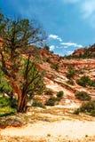 Slopes of Zion canyon. Utah. USA. Stock Photos
