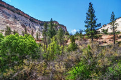 Slopes of Zion canyon. Utah. USA. Royalty Free Stock Photography