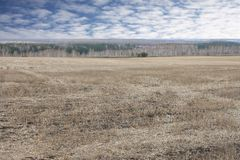 Sloping agricultural field. In a forest and sky Royalty Free Stock Photos
