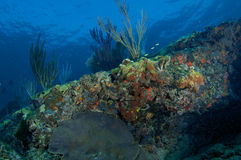 Sloping Coral Ledge Royalty Free Stock Photos