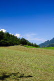Sloping field. In Switzelrand, August stock photography