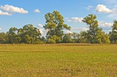 Sloping field in autumn Royalty Free Stock Photo