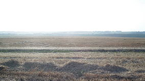 Sloping field of wheat in the autumn stock video footage