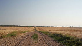 Sloping field of wheat and the road. In the autumn stock video footage