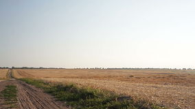 Sloping field of wheat and the road. In the autumn stock video
