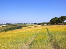 Sloping fields of ripening wheat in a patchwork summer landscape Stock Photography