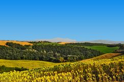 Sloping Meadows. Farmhouse Surrounded By Sloping Meadows Of Tuscany Stock Images