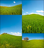 Sloping Meadows. Farmhouse and Green Sloping Meadows of Tuscany, Set Royalty Free Stock Images