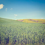 Sloping Meadows. Green Sloping Meadows of Tuscany, Instagram Effect Royalty Free Stock Photography