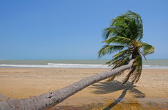 Sloping palm at beach. Beach with a sloping palm tree Stock Images