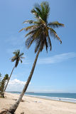 Sloping trees. Sloping palm trees at empty beach Stock Photo