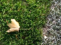 Slordig voetbalgebied met de kleurrijke bladeren van de de herfstesdoorn stock foto