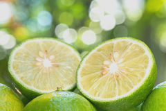 Sloseup Lime slice Royalty Free Stock Photo