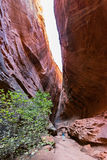 Slot canyon, Burr Trail in Utah Stock Photo
