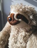 sloth Images stock
