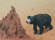 Sloth bear meets termite mound. Melursus ursinus in natural habitat Stock Illustration