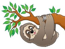 Sloth on branch theme image 1 Stock Photography