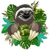 Sloth Cute Cartoon on Tropical Nature Stock Image