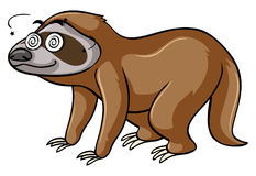 Sloth with dizzy eyes Royalty Free Stock Photography
