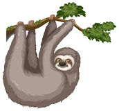 Sloth Stock Image