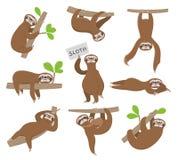 sloth Perezas animales del bebé lindo que cuelgan en la rama de árbol de los caracteres divertidos del vector de la selva tropica ilustración del vector