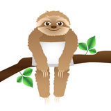 Sloth with a pillow sitting on a branch Royalty Free Stock Image