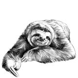 Sloth sketch. Sloth lies with crossed legs, looking right and smiling sweetly, sketch  graphics black and white drawing Stock Image