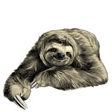 Sloth sketch. Sloth lies with crossed legs, looking right and smiling sweetly, sketch graphics color picture stock illustration