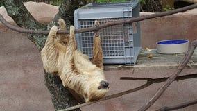sloth stawał 2 Zdjęcia Stock