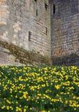 Slott för detalj för textur för stenvägg medeltida fotografering för bildbyråer