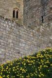 Slott för detalj för textur för stenvägg medeltida royaltyfri bild