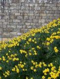Slott för detalj för textur för stenvägg medeltida royaltyfria bilder