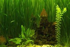 Slott i akvariet royaltyfri foto
