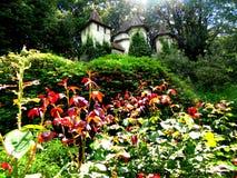 Slott i skogen Arkivfoto