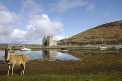 Slott på Lochranza i Skottland arkivbilder