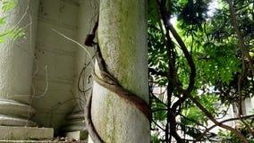 Slottbågar och kolonner som flätas ihop med den gröna murgrönan och lianen stock video