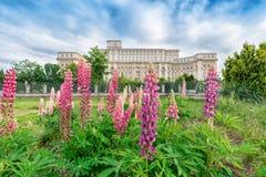 Slotten av parlamentet med härlig lupine blommar i f Royaltyfri Bild