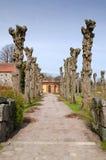 Slottväg med treestammar Royaltyfria Bilder