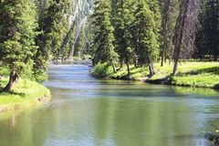 Slough Creek. The lazy river, Slough Creek, winds slowly through the forest of Yellowstone National Park during the summer time Stock Photography