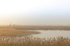 Slough del fiume Fotografia Stock Libera da Diritti
