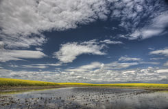 Slough pond and crop Royalty Free Stock Photography