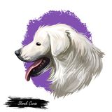 Slovak cuvac dog breed with long fur digital art. Watercolor portrait close up of domesticated animal sticking out. Tongue, hand drawn doggy slovakian purebred stock illustration
