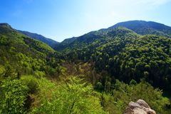 Slovak forests. In the Great Fatra royalty free stock photography
