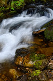 Slovak mountain stream Royalty Free Stock Photography