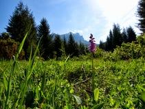Slovak mountains. Hiking to Rozsutec in Mala Fatra Stock Photography