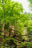 Slovak Paradise National Park. Forest in Slovak Paradise National Park with timber lying in a gorge stock photos