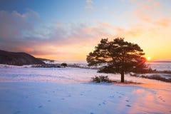 Slovak winter landscape. Stock Photography