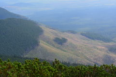Slovakia mountains. With green plants Royalty Free Stock Photography