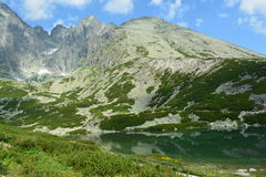 Slovakia mountains. Slovakia mountain lake, plants and flowers Stock Photos